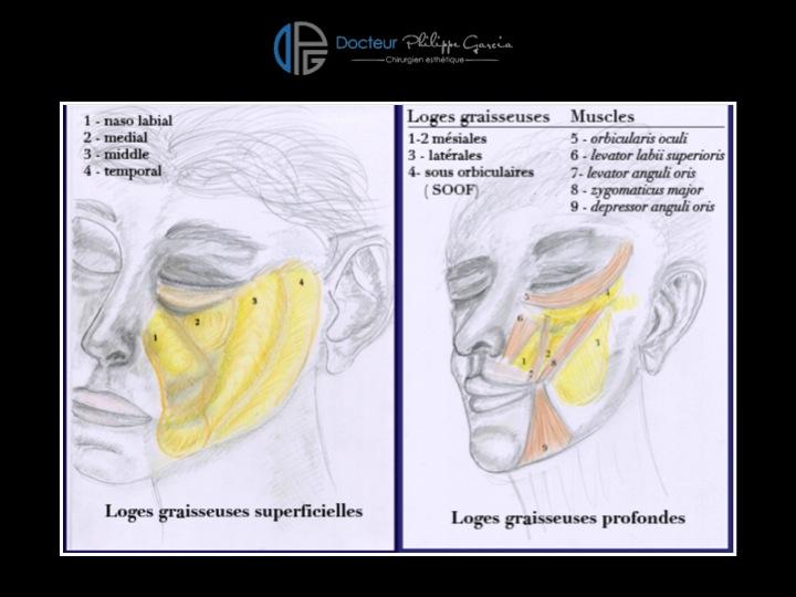 Tout savoir sur la ligne mandibulaire